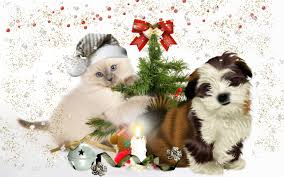 cute merry christmas wallpaper dogs. Wonderful Dogs 1920x1080 Merrychristmascutedog And Cute Merry Christmas Wallpaper Dogs S