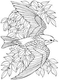 Bird Coloring Pages Printable Realistic Bird Coloring Pages