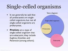 Compare Prokaryotic And Eukaryotic Cells Venn Diagram Cells Venn Diagram A Venn Diagram Showing The Relationsh