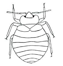 printable bug coloring pages insect coloring page clip arts to free printable insect insect coloring