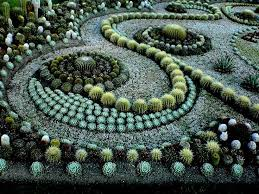 Small Picture Small Cactus Garden Design Garden Design Ideas