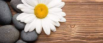 2560x1080 Camomiles Stones White Flower ...