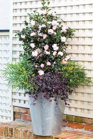 container plants container gardening