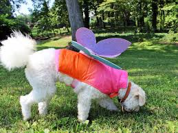 Image result for dog fairy