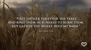 Wheat or tares? What are you? - Succeed in Life Center (SiLC)