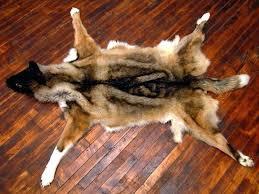 faux bear skin rug with head marvelous bear fur rug faux bear skin rug with head faux bear skin rug with head