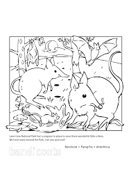 Small Picture Bandicoot Animal Coloring Pages Bandicoot Page nebulosabarcom