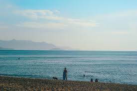 Free Photo Person Standing On Seashore Seashore Seascape Sea