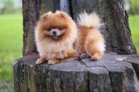 Weitere ideen zu hunderassen, hunde rassen, hunde. Kleine Hunde Die Beliebtesten Rassen Infos Liste Bilder
