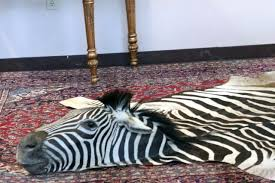 faux zebra rug animal rugs with head canada