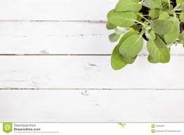 White table top view Plan View Image Of Indoor Sage Plant On Rustic White Table Top View Stock Image Luxury Room Decor Cutlery On Wooden Dining Table Top View Stock Photo