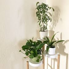 Beauteous Planters Gardenista Also Ikea Sneak New Bamboo Plant Stands ...