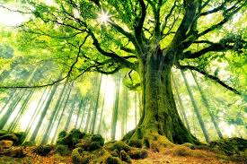 nature backgrounds. Green Trees Nature Backgrounds Tree On New Hd Full Pics Of Androids Famous Vision