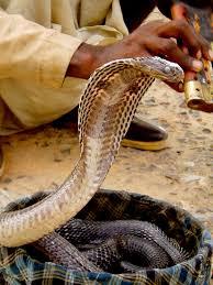 file snake in basket jpg