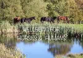 Angel Fields Natural Boarding - 14 Photos - Equestrian Center -