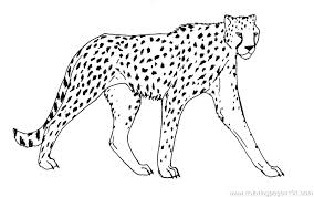 cheetah coloring pictures. Fine Coloring Coloring Pages Cheetah Free  To Print Page To Cheetah Coloring Pictures N