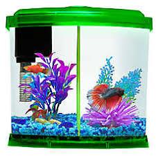 petsmart goldfish tank. Fine Petsmart Top Fin 1 Gallon Liquidy Split Aquarium Inside Petsmart Goldfish Tank R