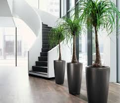 office tree. Large-size Of Pleasing South Africa Home Office Tree Plants Then Good Environment