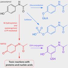 Infants Acetaminophen Concentration Change Chart Acetaminophen When It Becomes Dangerous All Modules
