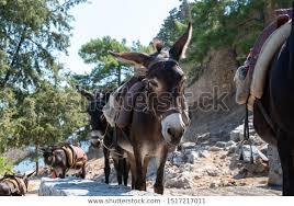 Sad Donkey Grace Rhodes Stock Photo (Edit Now) 1517217011