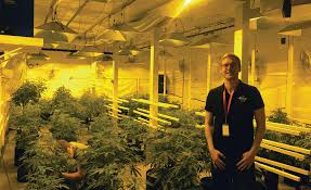 Basement Grow Room Design Impressive HVAC's Growing Role In The Marijuana Industry 484848 ACHRNEWS