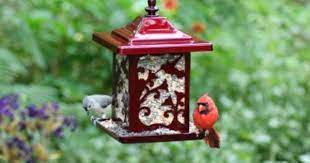 Homestead Hummingbird Jolly Pop Red Bird Feeder   Bird feeders, Hanging  bird feeders, Unique bird feeders