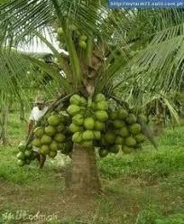 Minor Fruits In KeralaKerala Fruit Trees