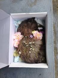 Shrouds Are Perfect For Pet Burials This One Is Called A Dog Burial Backyard