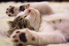 pet urine odor removal cat urine odor