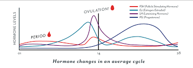 Ovulation When Do I Ovulate Ovulation Symptoms And More