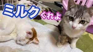 やまねこ と 猫 ロロ