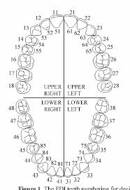 Tooth Chart 1 32 Figure 1 From Interactive Dental Charting Towards An