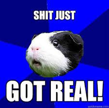 Jumpy Guinea Pig memes | quickmeme via Relatably.com