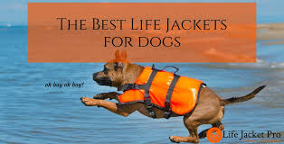 Vivaglory Size Chart The 5 Best Life Jackets For Dogs