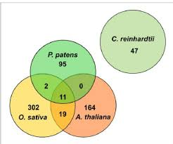 Venn Diagram Plants Venn Diagram Comparing Mirna Families From The Seed Plants A