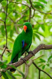 Wallpaper Parrot, Bird, Tree, Branch ...