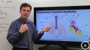 respiratory system biology video by brightstorm