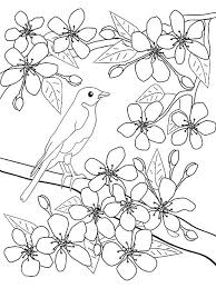 Bird on tree coloring page. Printable Spring Coloring Pages Parents