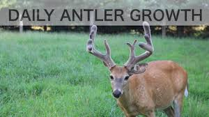 Whitetail Antler Growth Chart Time Lapse Antler Growth Of Whitetail Deer See How Fast Antlers Grow