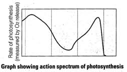 Action Spectrum Free Ncert Solutions For 11th Class Biology Photosynthesis