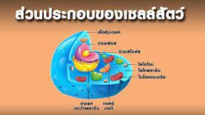 ส่วนประกอบของเซลล์สัตว์