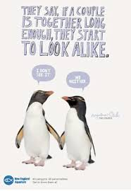 cute penguins in love. Simple Love Cute Penguin I Love You  Photo12 Intended Penguins In Love T