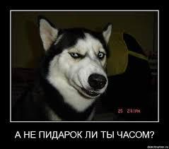 Похищенные террористами на Луганщине члены миссии ОБСЕ вышли на связь, - СМИ - Цензор.НЕТ 8756