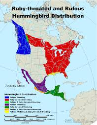 Hummingbird Migration Patterns