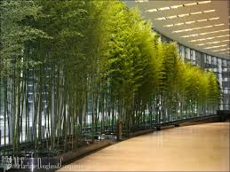 interior landscaping office. Perfect Landscaping Image Of Interior Landscaping Office For C