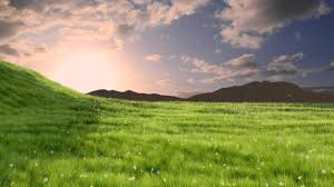 green grass field animated. Green Grass Field Animated A