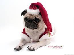 cute animal christmas backgrounds. Beautiful Animal Christmas Pug  Santa Christmas Snow Pugs Cute Animals Nature In Cute Animal Backgrounds E