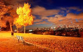 york, usa, autumn, bench, tree, night ...