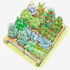 Small Picture Fall Vegetable Garden Plan
