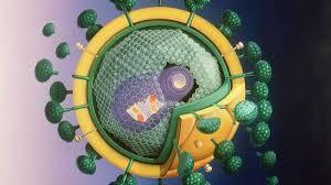 influenza impfung nutzlos ile ilgili görsel sonucu